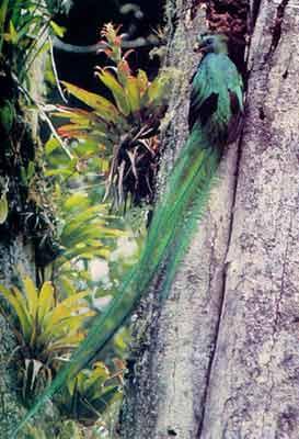 20081001205228-quetzalplumas.jpg