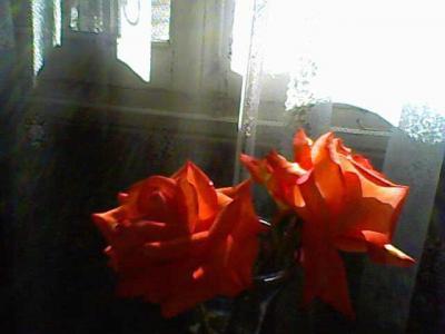 20090801015633-26-05-09-145-1-mis-rosas-betty-b.jpg