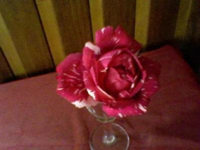 20091001051846-30-06-09-143-1-2-mis-rosas-betty-b.jpg