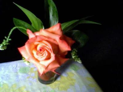 20091101013338-17-10-09-180-1-mis-rosas-betty-badaui.jpg