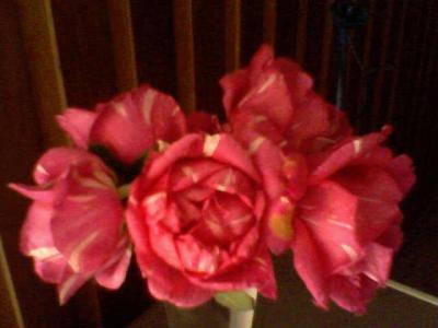 20100102024514-22-11-09-165-1-mis-rosas-betty-badaui.jpg