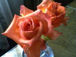 20110901191402-25-05-09-150-1-bettybadaui-mis-rosas.jpg