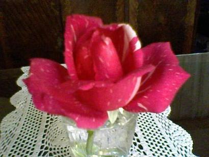 20111002191245-23-04-09-123-1-mis-rosas-betty-b-.jpg