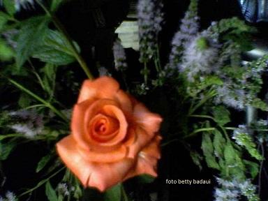 20111002191501-08-12-10-174mis-rosas-betty-badaui-.jpg