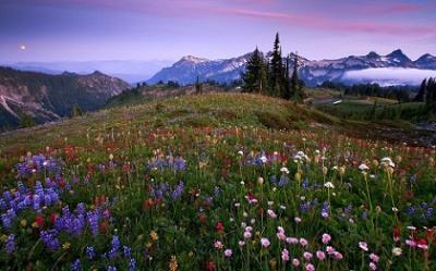 20131002022557-flores-silvestres-en-montanas-2349.jpg