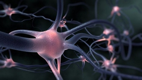 20140902022843-neuron-thumb-2-sacado-de-internet.jpg