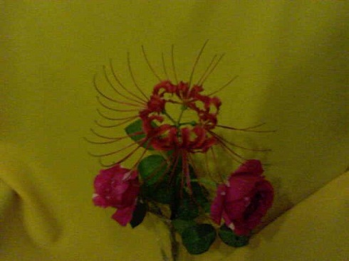 20160128234720-21-03-10-141mis-flores-betty-badaui-2.jpg