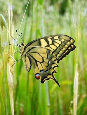 20160809215251-red-de-internet-mariposas.jpg