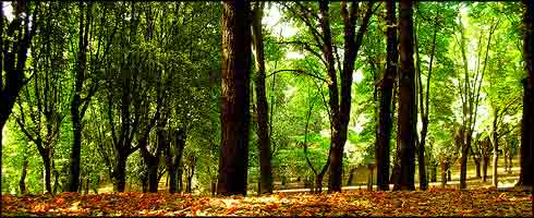 20080711075718-bosque-estado.jpg