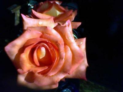 20090601002736-26-05-09-mis-rosas.jpg