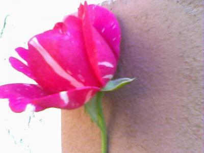 20090601020450-30-04-09-172-1-mis-rosas.jpg