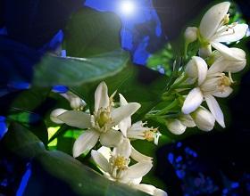 20110303034611-azahar.jpg
