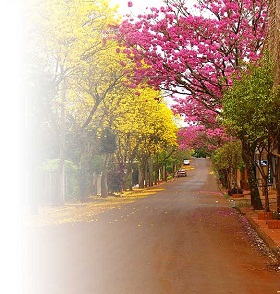 20120602034954-lapachos-1-.jpg