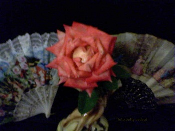20120910161558-16-03-10-031mis-rosas-bettybadaui-2.jpg