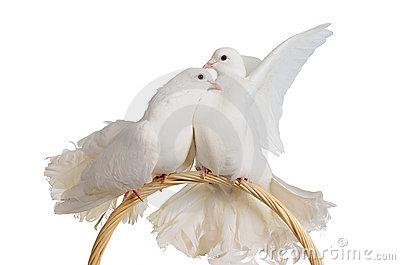 20140402001340-dos-palomas-blancas-que-se-besan-y-que-abrazan-21934747-libre-de-regalias-.jpg
