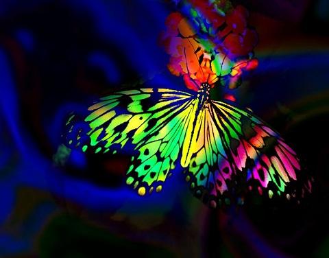20170802071557-mariposa-02-poema-normy.jpg