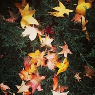 20180604212614-04-hojas-secas-otono.jpg